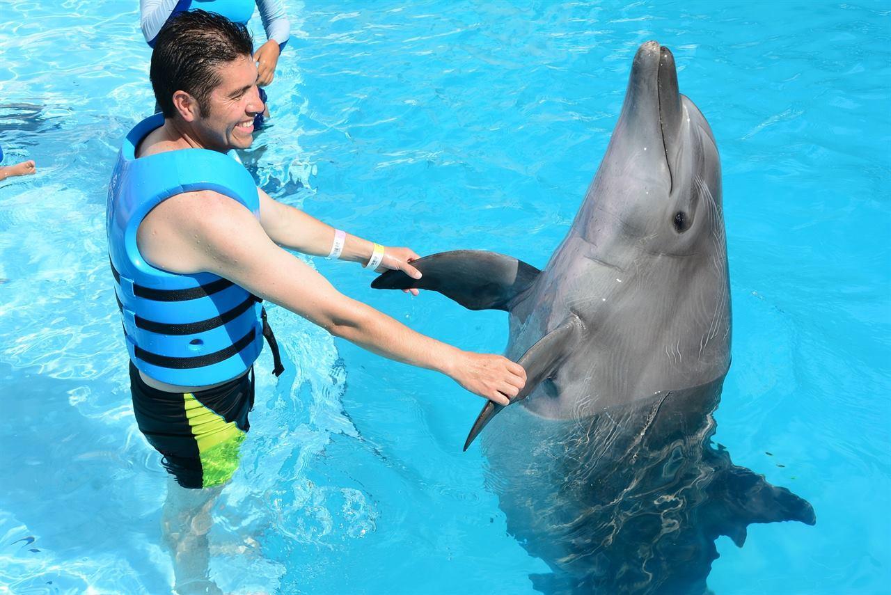 Дельфины играют с людьми