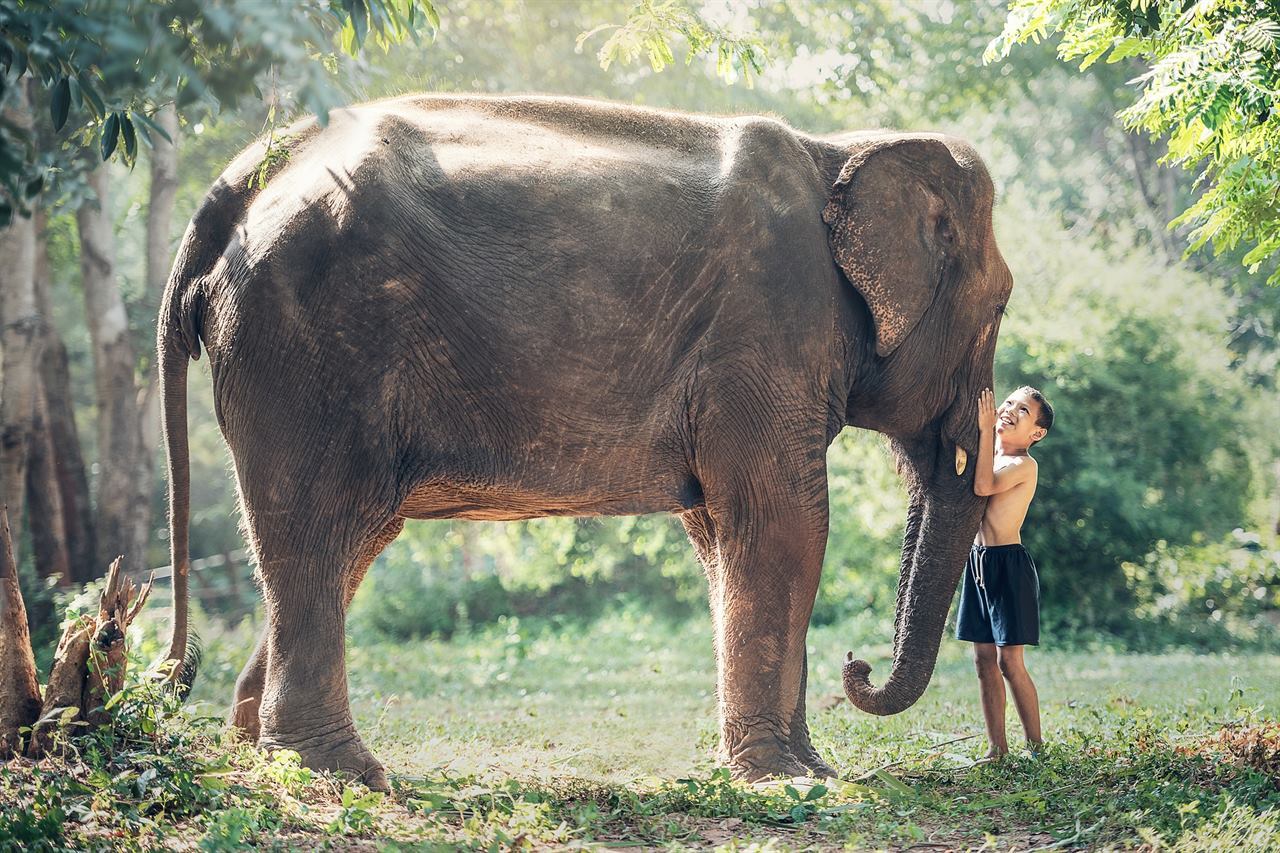 Дети со слоном на острове Бали