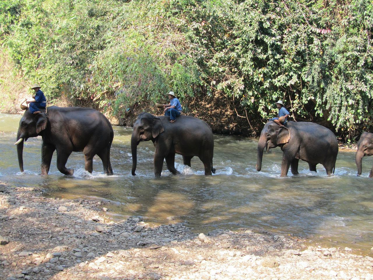 Прогулки со слонами на Бали