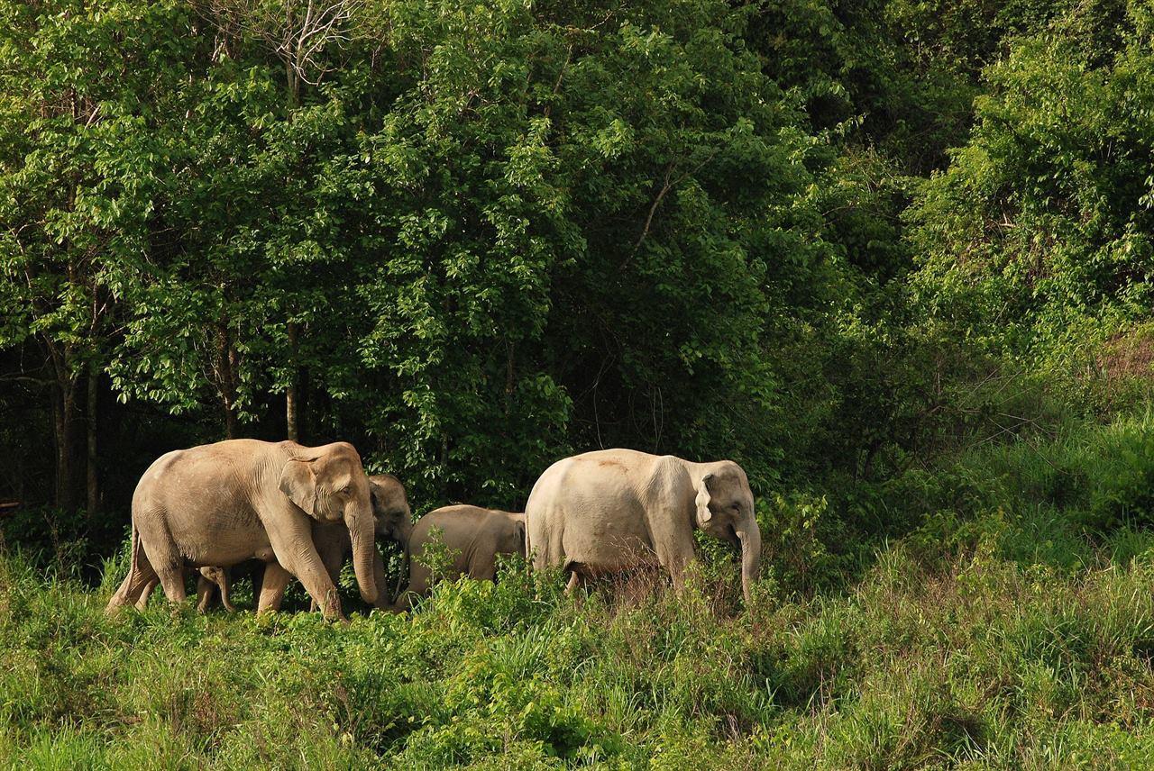 Балийские слоны в диких джунглях