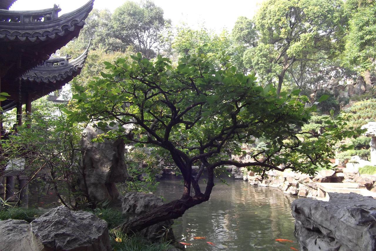 Китайский Шанхай Юй Юань