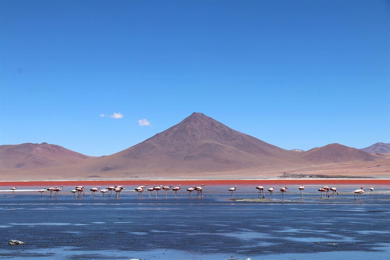 Удивительная природа Боливии, или незабываемая лагуна Колорадо