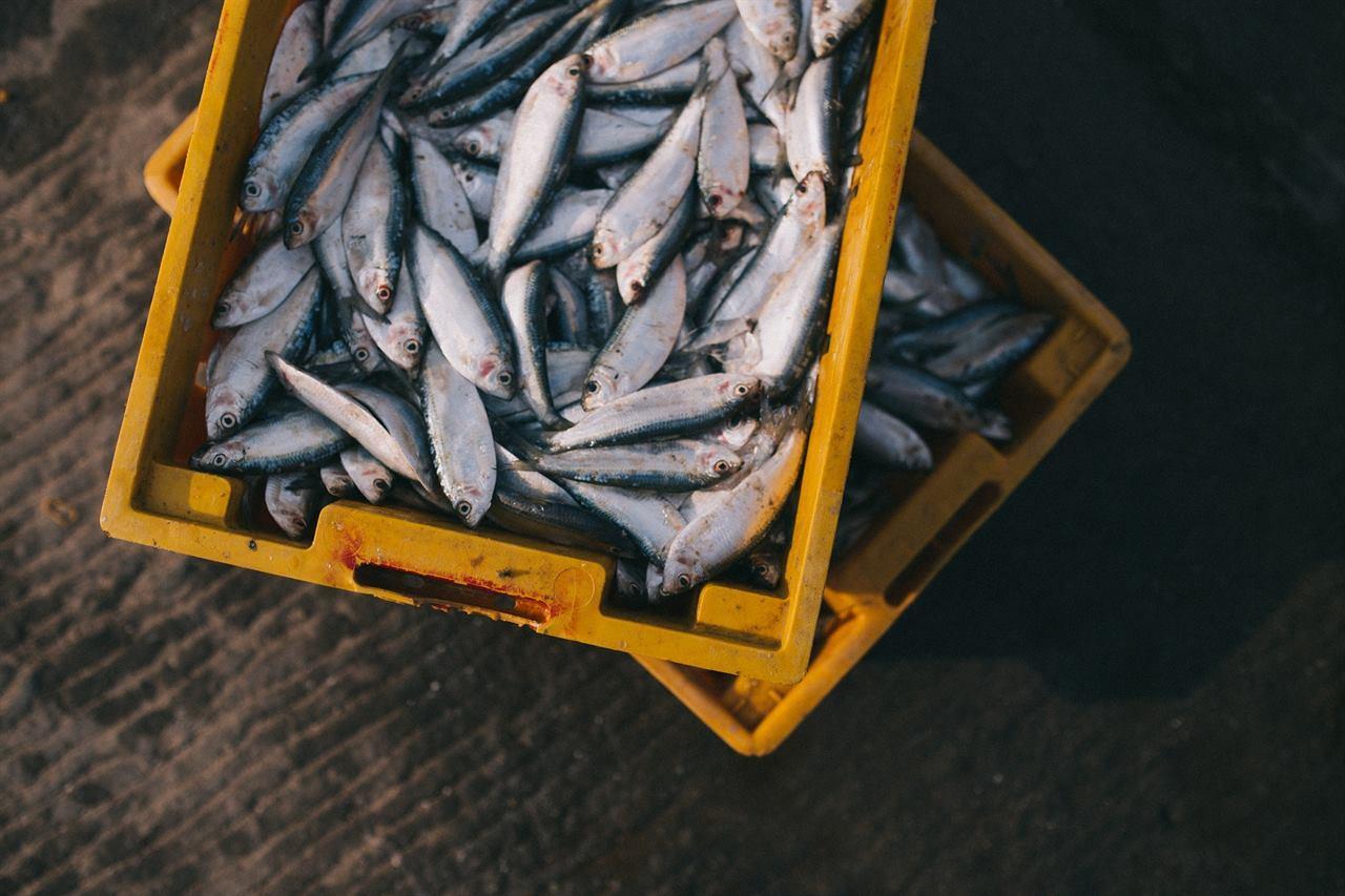 Финская рыба