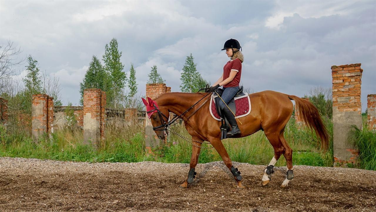 Конная прогулка верхом на лошади