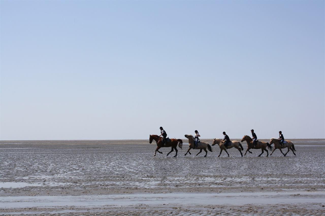 Конные туры на лошодях