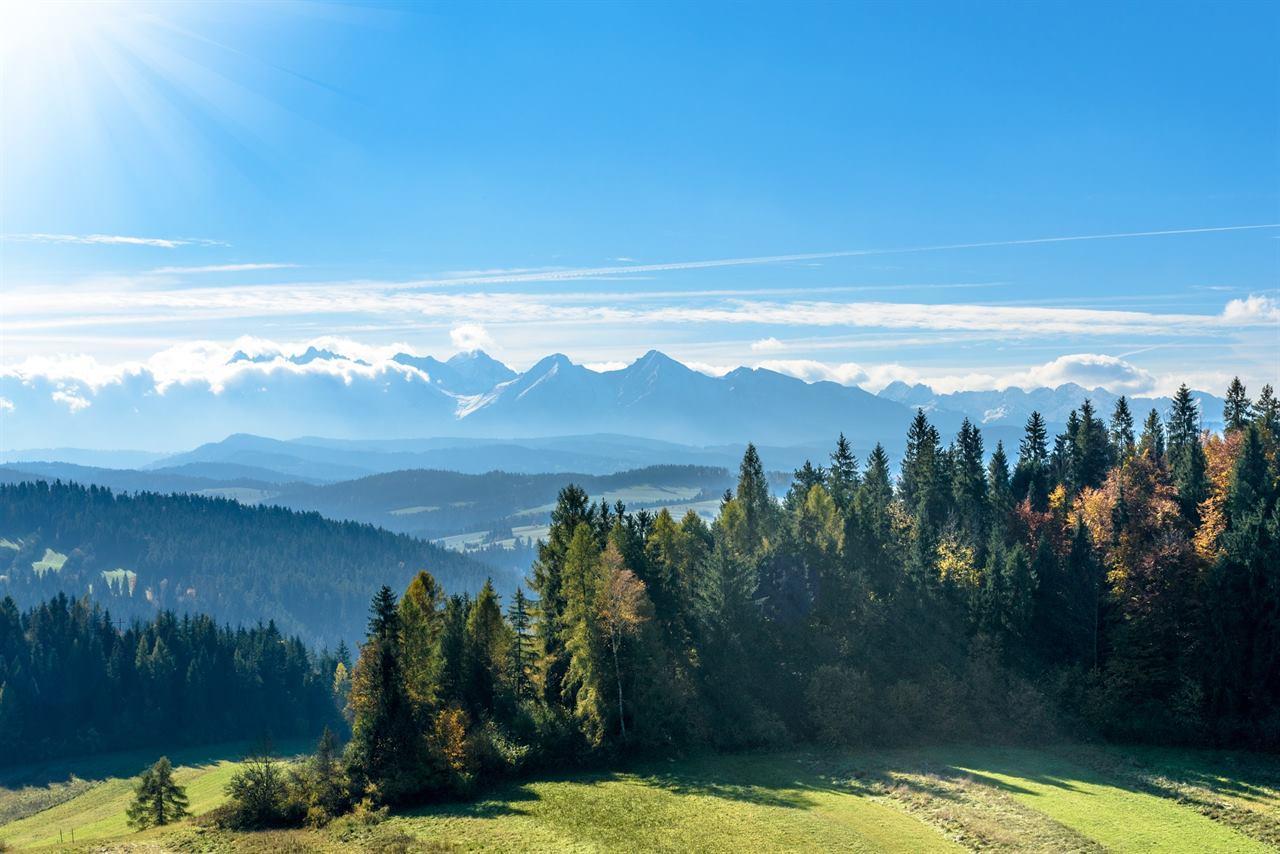Горы леса луга