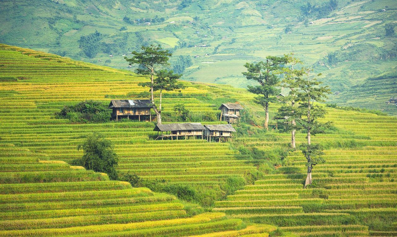 Плантация в деревне Вьетнам