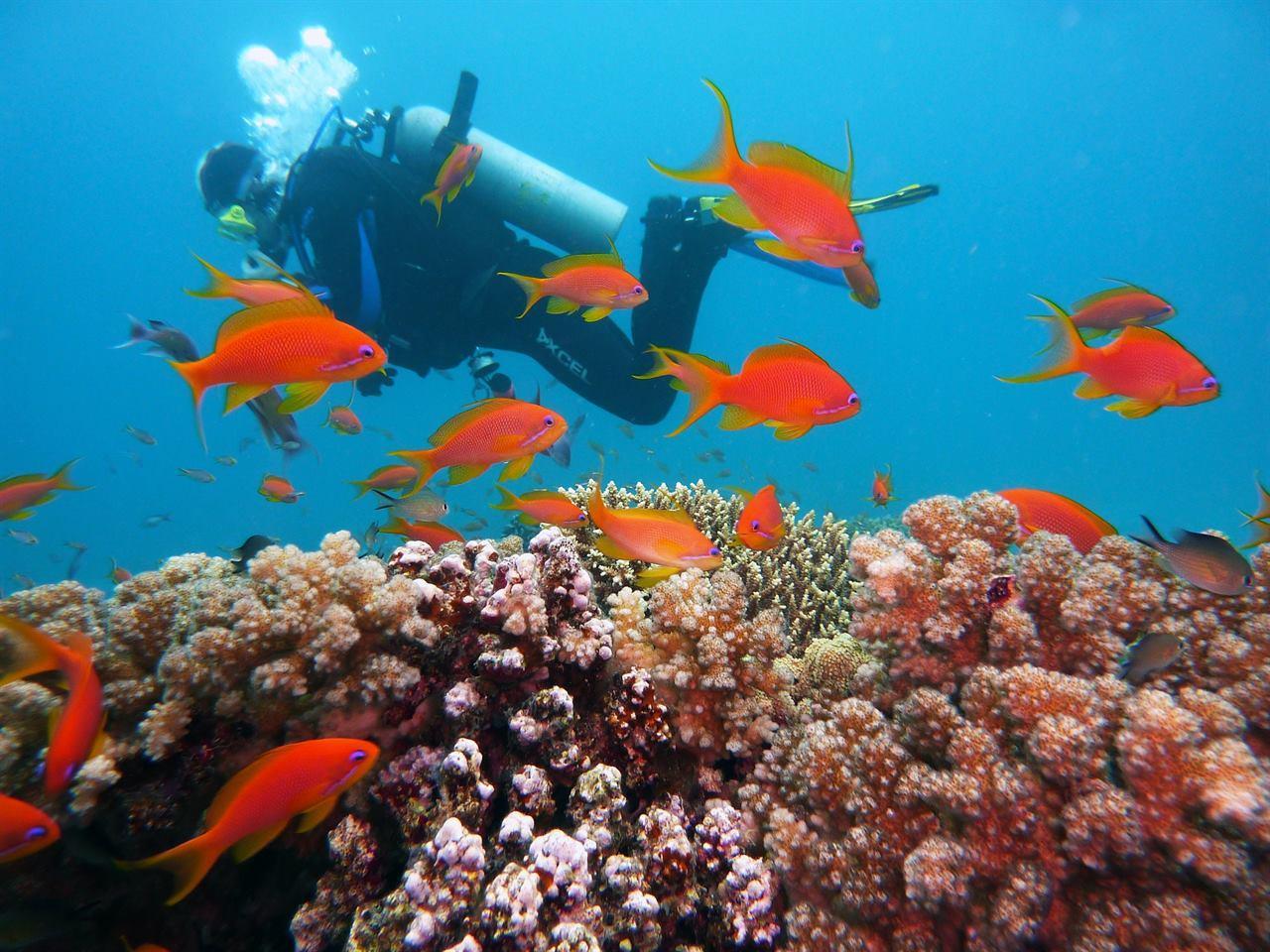 Морской отдых Дайвинг в Египте