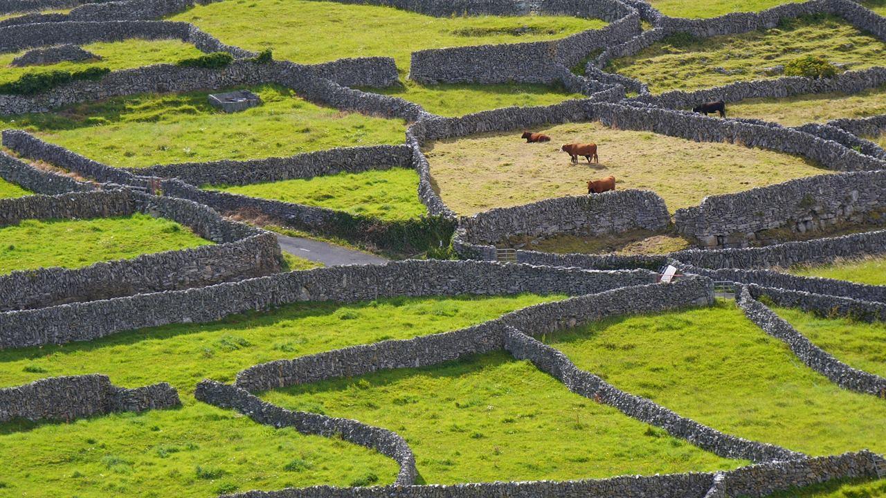 Поля и пастбища Ирландия