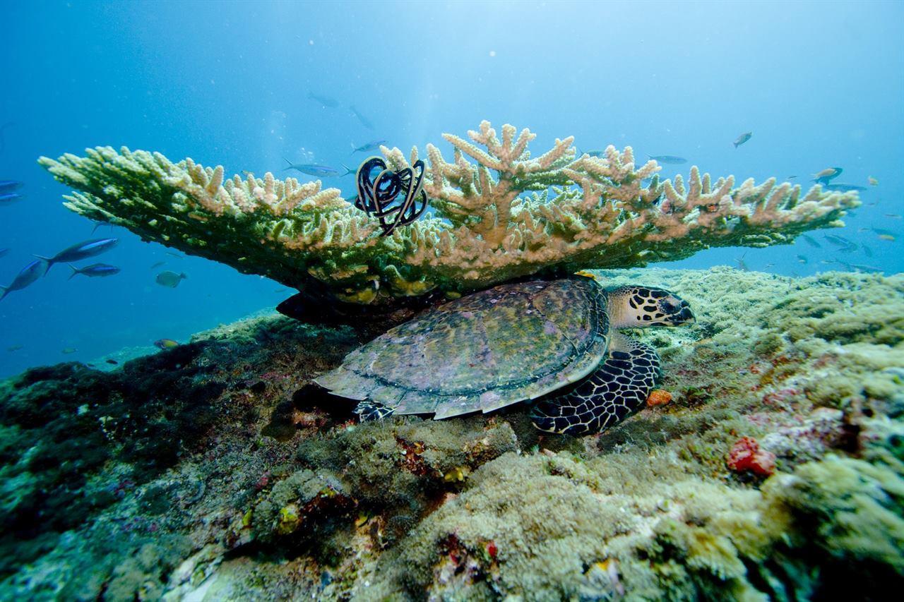 Подводная флора и фауна Мальдивы