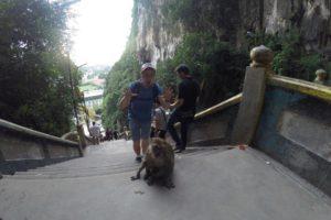 Путешественник пугает обезьяну