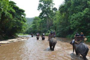 Туристическая прогулка на слонах и купание с балийскими дельфинами